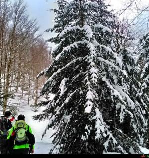 Escursione su neve pista di Nino Martino