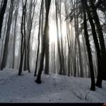 Sole tra le nubi dietro un bosco innevato vicino alla strada
