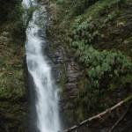 A destra, proprio accanto alla cascata, la felce preistorica Woodwardia Radicans