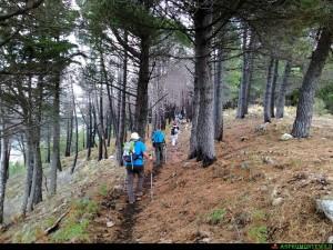 Sentiero nella pineta di Monte Grosso, Campi di Bova