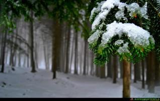 Voglia di neve